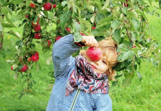 Pommes3