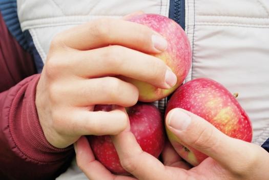 Pommes4